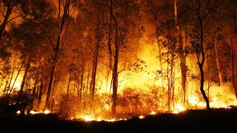 The MoEF and ITTO Collaborate on Forest and Land Fires