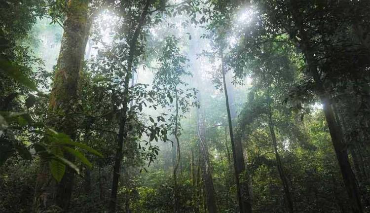 Apakah Opsi 'Carbon Offset' Baik Buat Lingkungan?