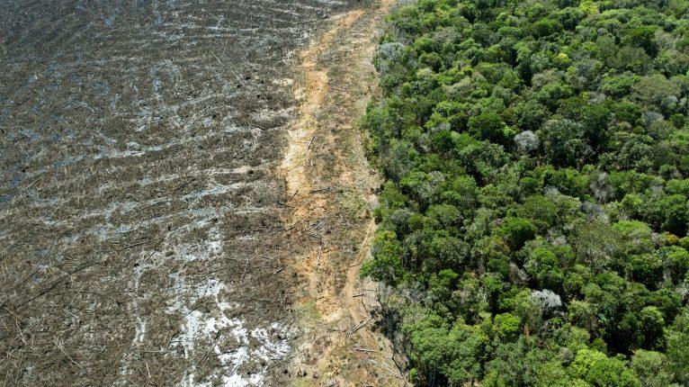 Pengakuan Ekosida Sebagai Kejahatan Berat
