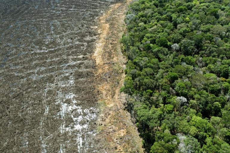 Momentum Majelis Internasional Mengakui Ekosida Sebagai Kejahatan Berat